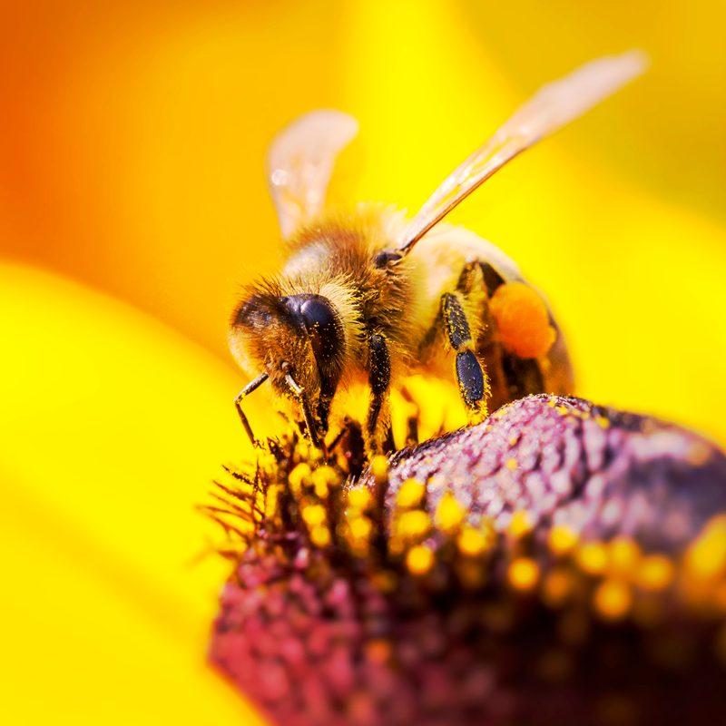 Pszczoły super bohaterki - jak ważne są w naszym życiu?